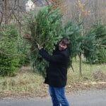 Chistbaum schneiden mit RETTER EVENTS