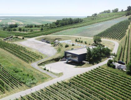 Weingärten von Leo Hillinger in Joise